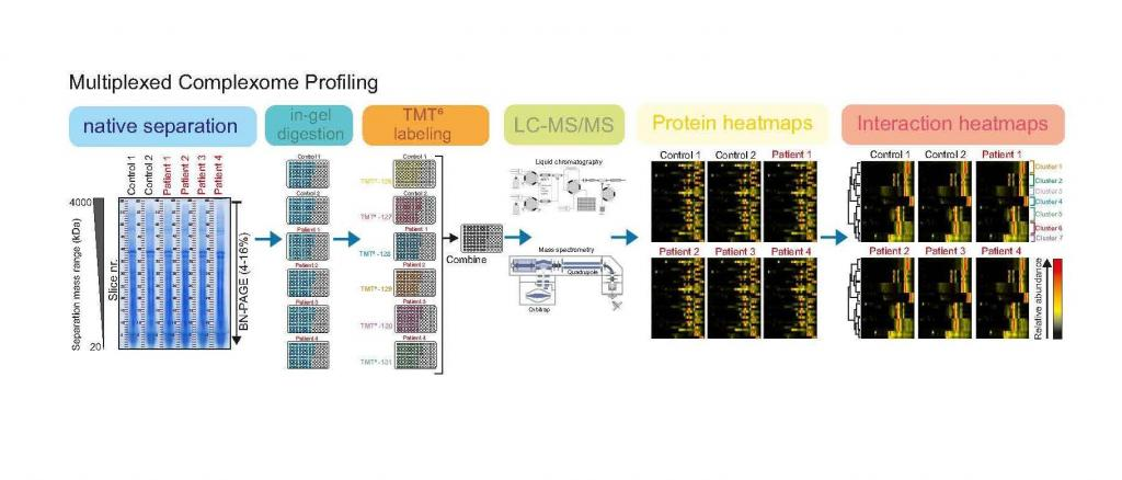 Multiplexed complexome profiling